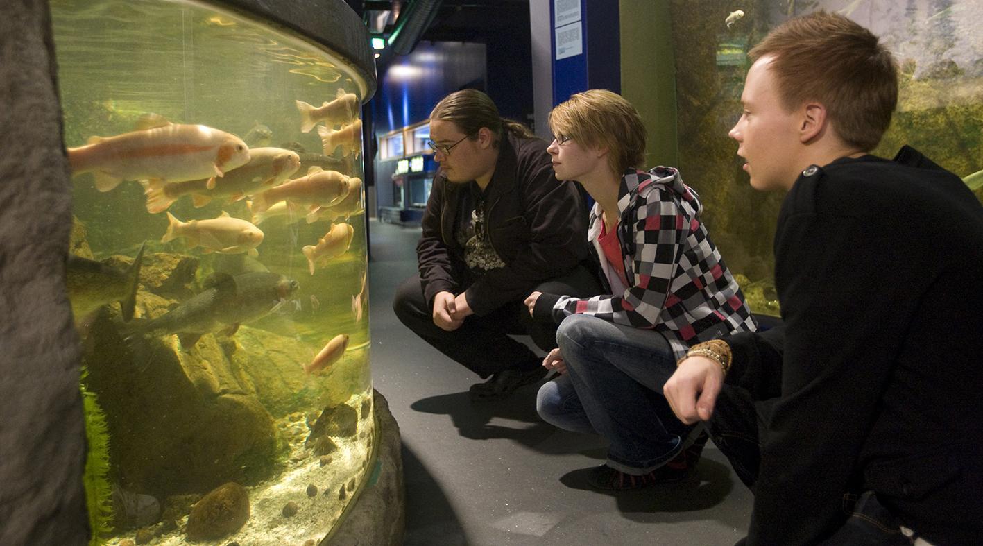 Akvaariotalo Maretarium Kotka