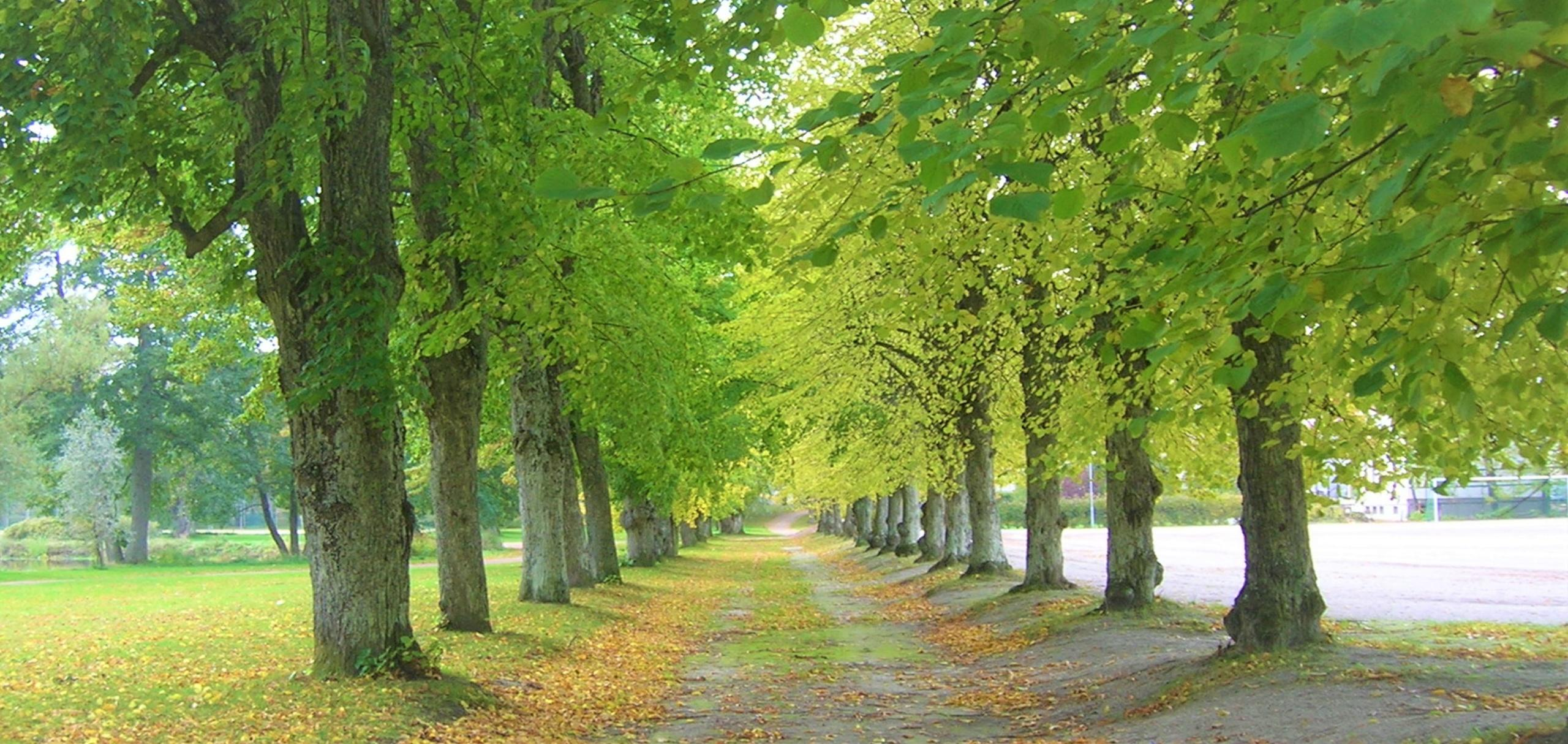 Kuvassa puukuja Hangon Kylpyläpuiston alueella.