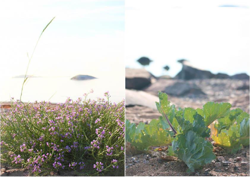Kasvillisuutta Furuvikin rannalla Hangossa.
