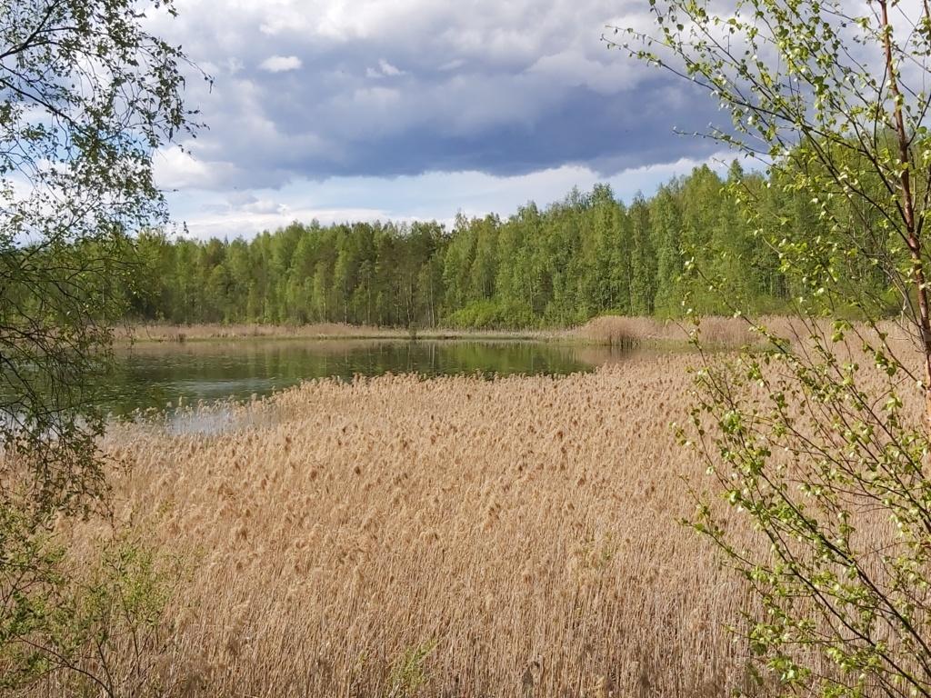 Isiäinen -järven rantakaislikko