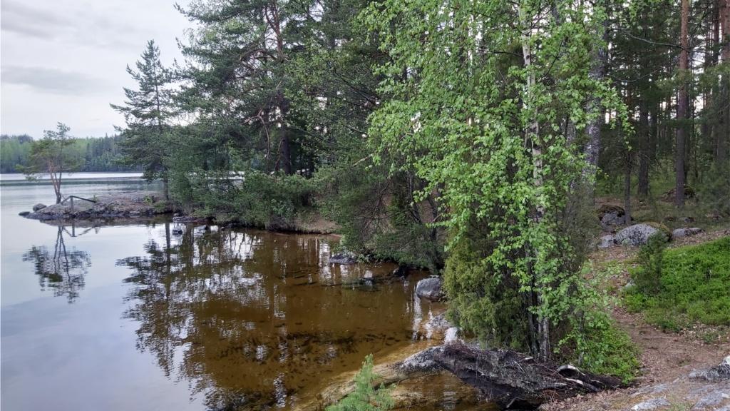 Maisema Koskensaaresta