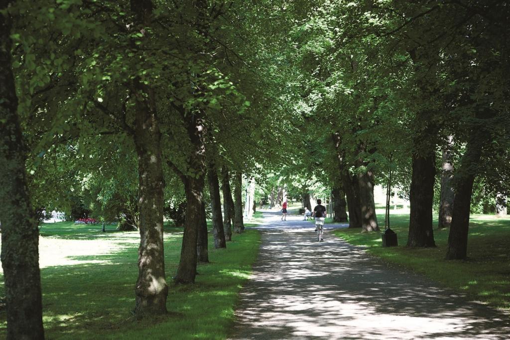 Rantapuiston puukuja