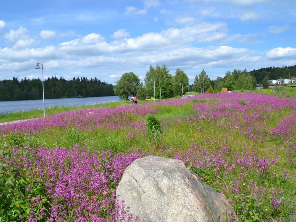 Alkukesällä kauttaaltaan aniliininpunaisena kukkiva iso niittyalue, etualalla luonnonkivilohkare. Viistosti vasemmasta laidasta kohti oikeaa reunaa kulkee valaistu ulkoilureitti, jolla on pari pyöräilijää. Horisontissa kauempana siintää Vanajavesi ja oikeassa reunassa uusia pienkerrostaloja.