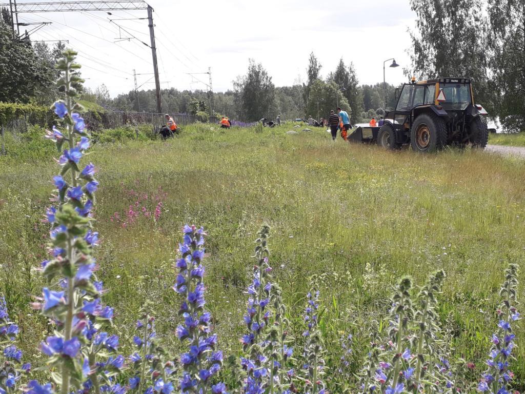 Ihmisiä kauempana työn touhussa niityllä. Oikeassa reunassa seisoo traktori kauha maassa, vasemmassa reunassa rata-alue osittain kasvillisuuden peittämän metallisen suoja-aidan takana. Kuvan etureunassa lähellä sinisenä kukkivia neidonkieliä.